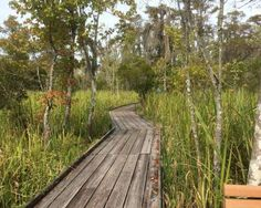 Follow a ranger from the Jean Lafitte National Historical Park and Preserve on a riverfront history ... - JeanLafitteNPS/facebook.com