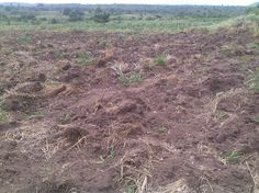 60 acres of plain Land acquired for Real Estate Development and Cement Manufacturing Plant @ Kasoa ,Ghana . Interested Investors inbox for details .#africagrowth #businessafrica #investment