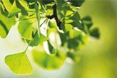 No Tires las Cáscaras de Huevo. Utilízalas para tu Salud Plant Leaves, World, Plants, Vitamins And Minerals, Natural Remedies, Herbs, The World, Plant, Planets