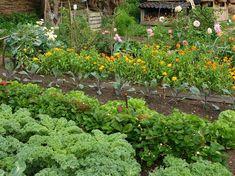 Herbs, Flowers, Plants, Gardening, Decor, Decoration, Lawn And Garden, Herb, Plant