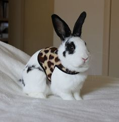 Well. Excuse me while I go get a rabbit and this thing and a leash for walking my new best bunny friend.