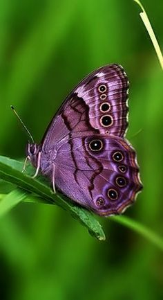 Beautiful Butterfly …