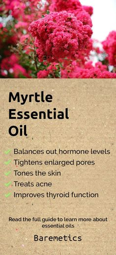 Myrtle essential oil balances out your hormone levels, improves thyroid function, tightens enlarged pores, balances out oil production and is great for clearing up your skin. Add a few drops to your moisturiser for an easy way to improve the condition of your skin. Learn more about myrtle and other essential oils in this complete guide by clicking on the image above!