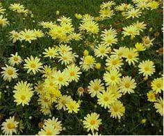 flores juncos - Buscar con Google