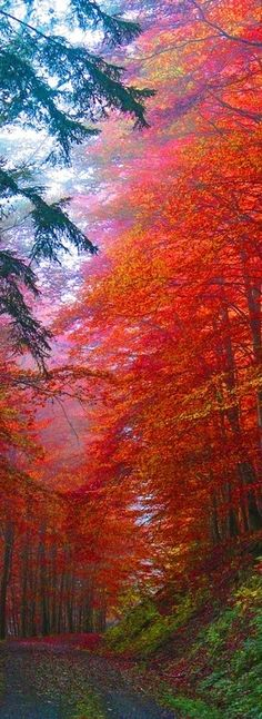 Autumn Forest, Saxony, Germany photo via destiny. - Science and Nature All Nature, Amazing Nature, Autumn Nature, Beautiful World, Beautiful Places, Trees Beautiful, Amazing Places, Beautiful Forest, Wonderful Places