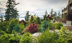 Great suggestions for using evergreens in your landscape.