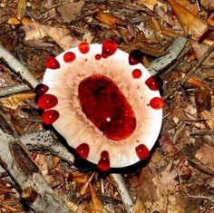 "The Incredible ""Bleeding"" Mushroom   #MostBeautifulPages"