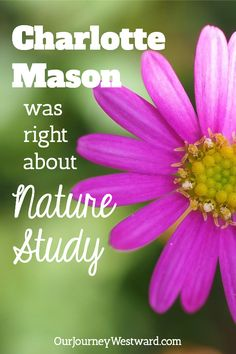 Charlotte Mason Was Right About Nature Study High School Curriculum, Homeschool Curriculum, Homeschooling, Philosophy Of Education, Charlotte Mason, Nature Study, Middle School, Science, Learning
