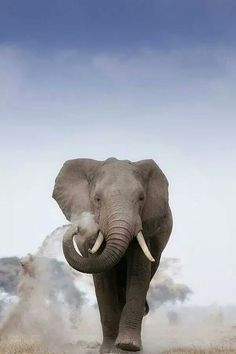 Elephants are so majestic.