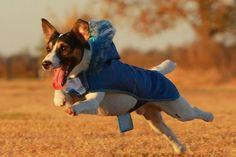 perro vestido1