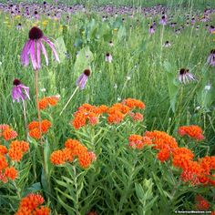 Do your part to help the struggling pollinator population by adding long-blooming wildflowers to your garden or meadow. Our Southeast Pollinator Mix attracts bees, butterflies and more to your property all season long with favorites like Butterfly Weed, Black-Eyed Susan, Red Poppy and more. This robust wildflower blend blooms all season long, year after year, providing food, habitat and breeding grounds for a variety of pollinators. Colorful and easy to grow. All of the seed we handle at…