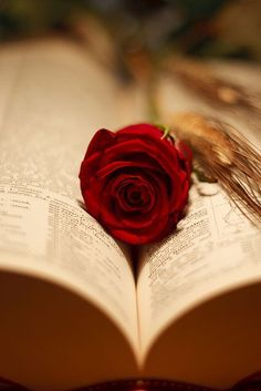 You gave me a rose...I laid it on a prose....and the words sprung a poem...and the poem spoke to me about you...and I vowed to your poem ...that I'll always cherish my rose...¥¥