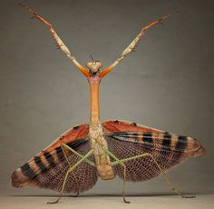 Aliens on Earth: macro photographs of insects by Igor Siwanowicz