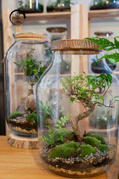 Build A Terrarium, Air Plant Terrarium, Succulent Terrarium, House Plants Decor, Plant Decor, Vertikal Garden, Plants In Jars, Moss Decor, Plantas Bonsai