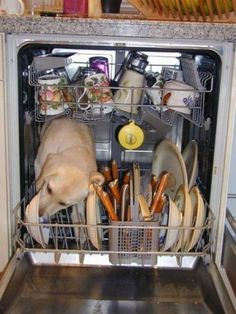 """""""The Pre-Wash Cycle!"""" Yep, this happened at our place! Ours still licks the dishes in the dishwasher he just doesn't fit inside anymore :P Funny Animal Pictures, Funny Animals, Cute Animals, Funny Photos, Funniest Photos, Hilarious Pictures, Dog Photos, Wild Animals, I Love Dogs"""
