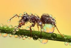 Close-up photos of insects covered with water droplets. Cool!