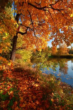 Autumn Wallpapers - Page 74 Beautiful World, Beautiful Places, Beautiful Pictures, Fall Pictures, Nature Pictures, Autumn Photography, Landscape Photography, Nature Architecture, Autumn Scenes