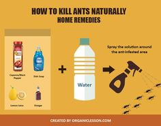 Exceptionnel How To Get Rid Of Ants Permanently With 7 Quick Home Remedies