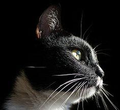 my kitty :3