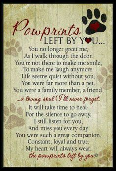 R.I.P. Tank...Our hearts are broken. We miss you so much!! I thank God I found you and even tho you were only with us for a short time you taught me so much.. Oh Tanko I love you!!forever!!
