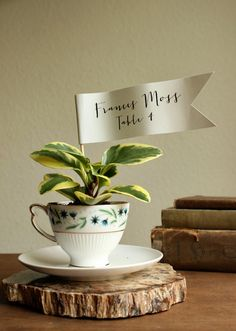 DIY Teacup Planter Favors