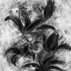 black and white lilies