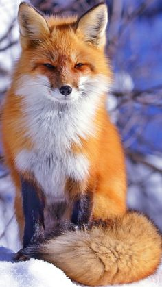 High-Quality Gathering Of Fox Pictures To Spread The Love Pics) photography. - chat - High-Quality Gathering Of Fox Pictures To Spread The Love Pics) High-Quality Gathering Of Fox Pictures To Spread The Love Pics) Nature Animals, Animals And Pets, Funny Animals, Wild Animals, Animals Photos, Farm Animals, Drawings Of Animals, Funniest Animals, Face Drawings