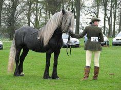 Penmire Dudley Dales Pony