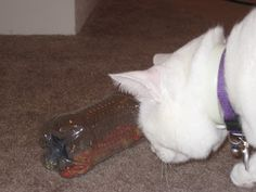 All Things Pink: New Home-made Cat Toy fill with treats and make a few small  holes in the bottle