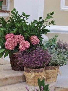 Llorens y Duran Wedding Bouquets, Wedding Flowers, Wedding Designs, Wedding Ideas, Floral Arrangements, Plants, Decoration, Ideas Para, San Francisco