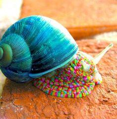 is it a snail? (81 pieces)