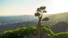 Sunset and Panoramic View of Los Angeles #spring #2017 #california #losangeles #la #usa #visit #travel #traveler #traveling #калифорния #лосанджелес #friendlylocalguides #panoramic #view #scenic #apline #sunset