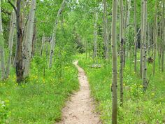 Golden Gate Canyon State Park - trail through Frazer Meadows en route to Panorama Point.
