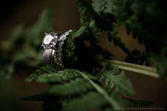 Rhett & Jillian :: Ain't No Mountain High Enough :: {Oregon Elopement Photographer} » Velvet Owl Photography Blog