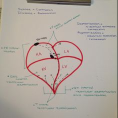 *** The heart and ECG components shown on the heart - my heart study guide for med surg!