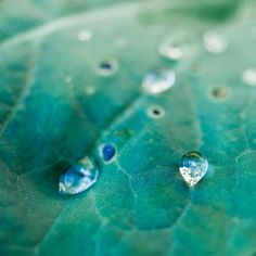 Macro / Nature / Water droplets by ►CubaGallery, via Flickr