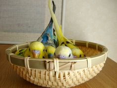 Basket of Budgies 💛💚💙💜❤️ Budgie Parakeet, Parrots, Parakeets, Blue Parakeet, Crazy Bird, Conure, Bird Pictures, Cute Birds, Backgrounds