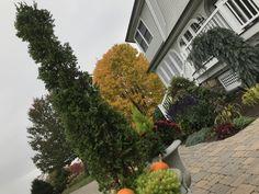 Fall Entrance Planting Cape Neddick