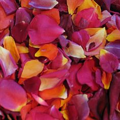 Romantic Blend Freeze dried petals direct from the grower!  Flyboy Naturals Rose Petals.  www.flyboynaturals.com