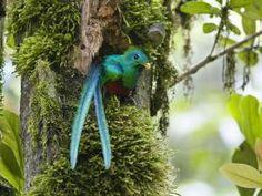 Pájaro muy colorido en su nido en el tronco de un árbol