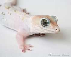 Lizard Photography  Exotic Tokay Gecko Reptile by summerowens via Etsy.