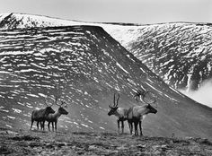 Reindeer graze in the mountains. Amazing Photography, Street Photography, Landscape Photography, Salt Of The Earth, Mountain Photos, My Point Of View, Documentary Photographers, Contemporary Photographers, Black And White Photography