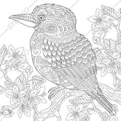 Kookaburra Bird Australian Kingfisher Coloring Pages Animal Book For Adults Instant Download Print