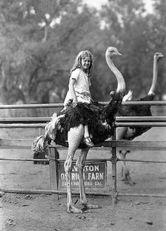 now this girl is riding an ostrich!