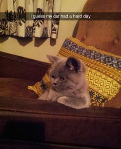 the-best-funny-pictures-of-cat-had-a-hard-day.jpeg (550×677)