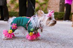 Adorable dog Halloween costumes at Chicago Botanic Garden's Spooky Pooch Parade