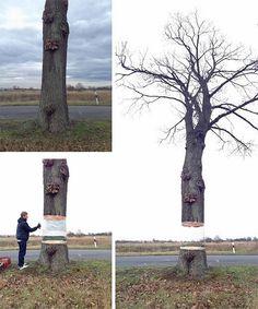 Bem Legaus!: Árvore flutuante