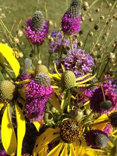 August wildflower bouquet; Yellow Coneflower & Purple Prairie Clover; http://tamingwildflowerfarm.com #wildflower #bouquet #flower