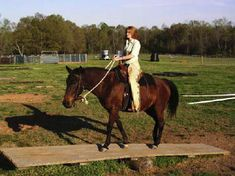 Balance beam develops trust in leader. Horse gains confidence to achieve firm footing while balancing.