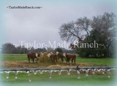 Wordless Wednesday: An Icy Morn in Wolfe City, Texas #TaylorMadeRanch